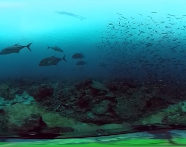 Freediving the Coral Reef in 360