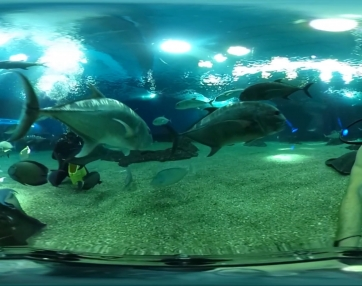 Sharks, Stingrays and Giant Trevally - 360 video swim about