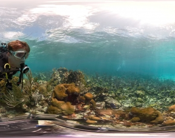 Coral Reef Puerto Rico - GoPro Fusion 5K 360 video using 360bubble underwater housing
